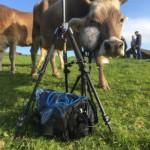 Ambeo Cow Projektstudio Ben Langsch